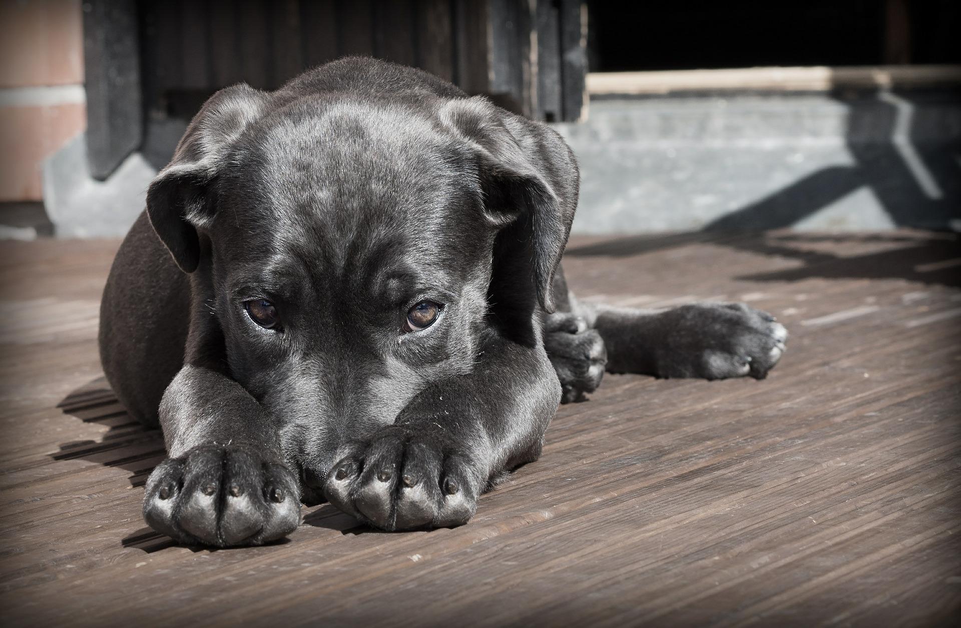 Mein Hund frisst nicht mehr – Gründe für Appetitlosigkeit bei Hunden