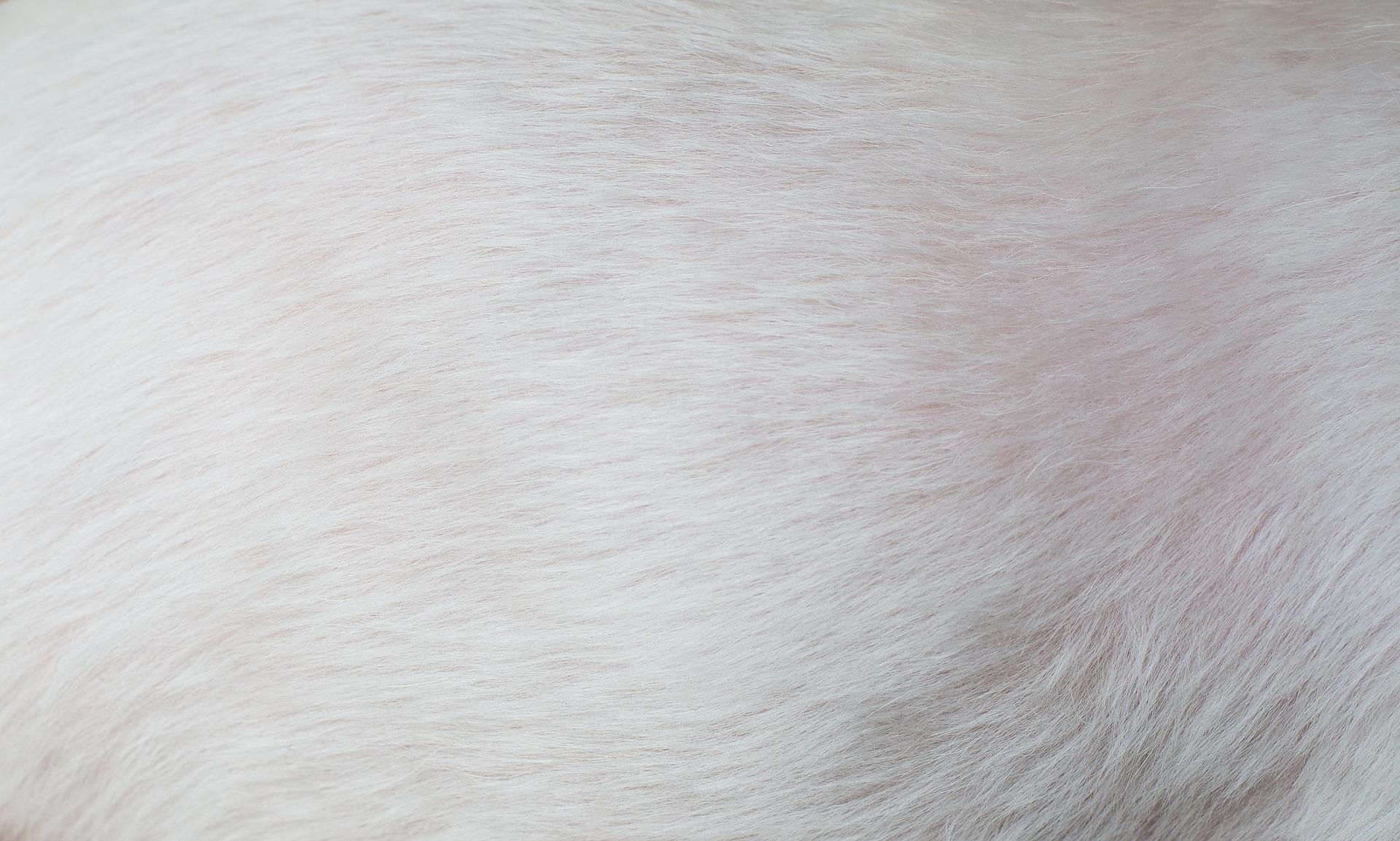 Bild zeigt weiße Hundehaare