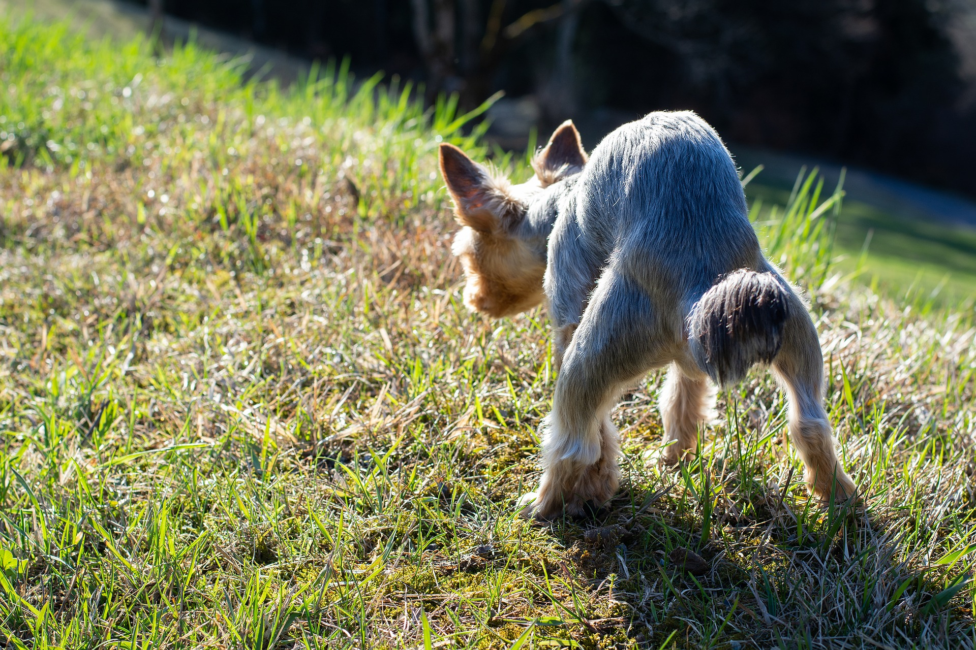 Analdrüsen beim Hund – Behandlung bei Beschwerden