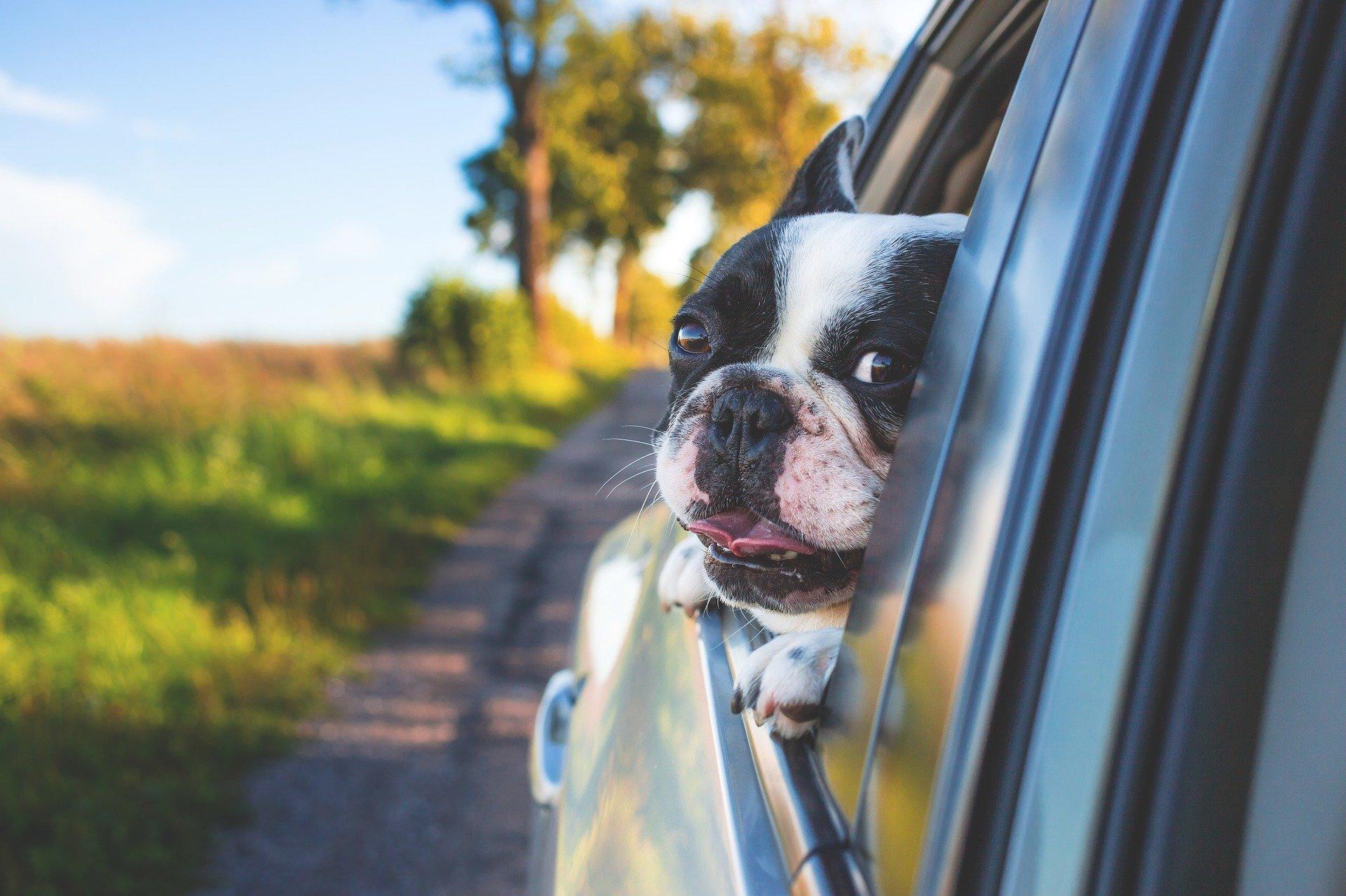 Wie sichere ich meinen Hund   im Auto?