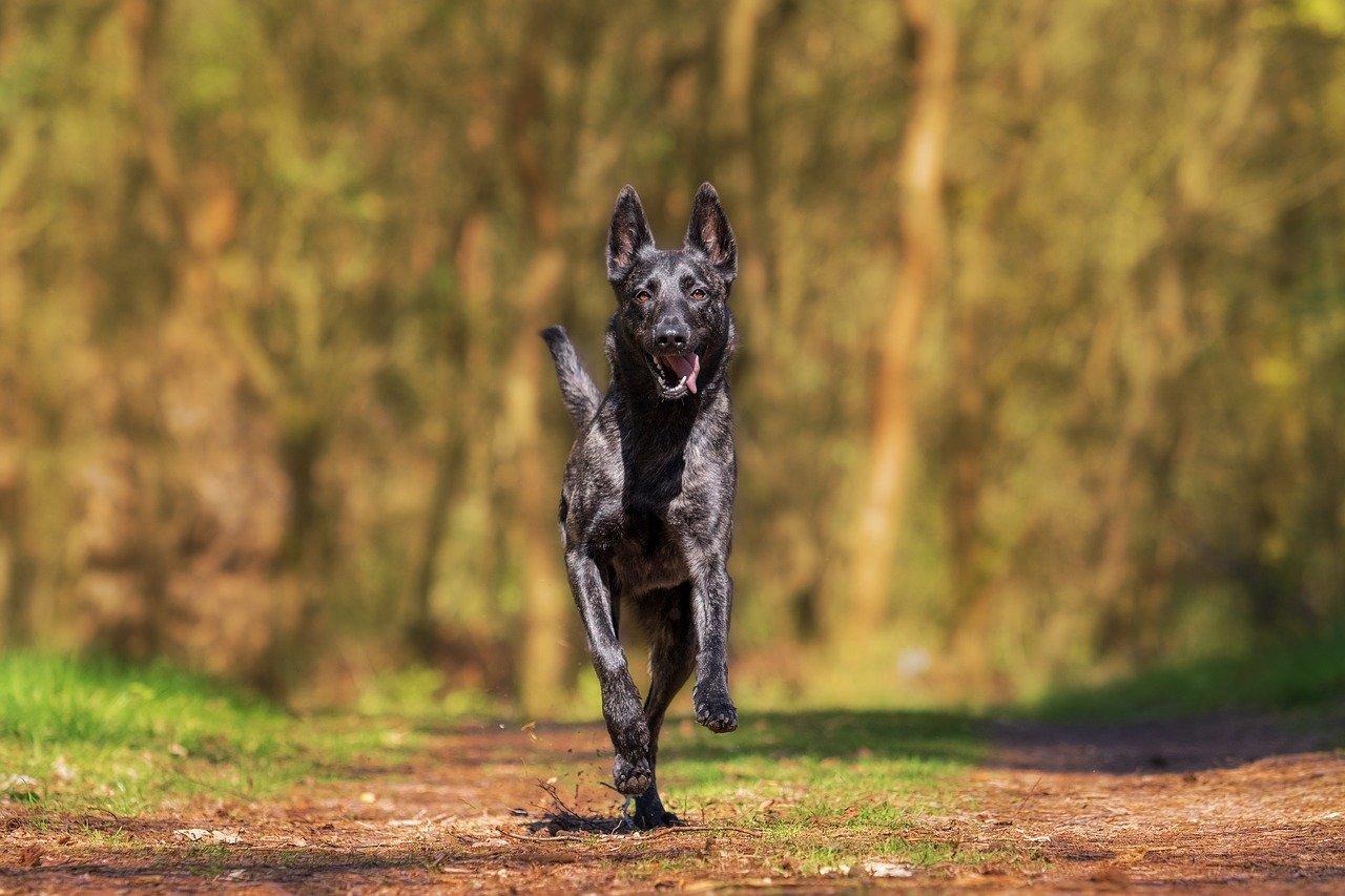 Gelenkprobleme bei Hunden:  Hintergründe und Therapiemöglichkeiten