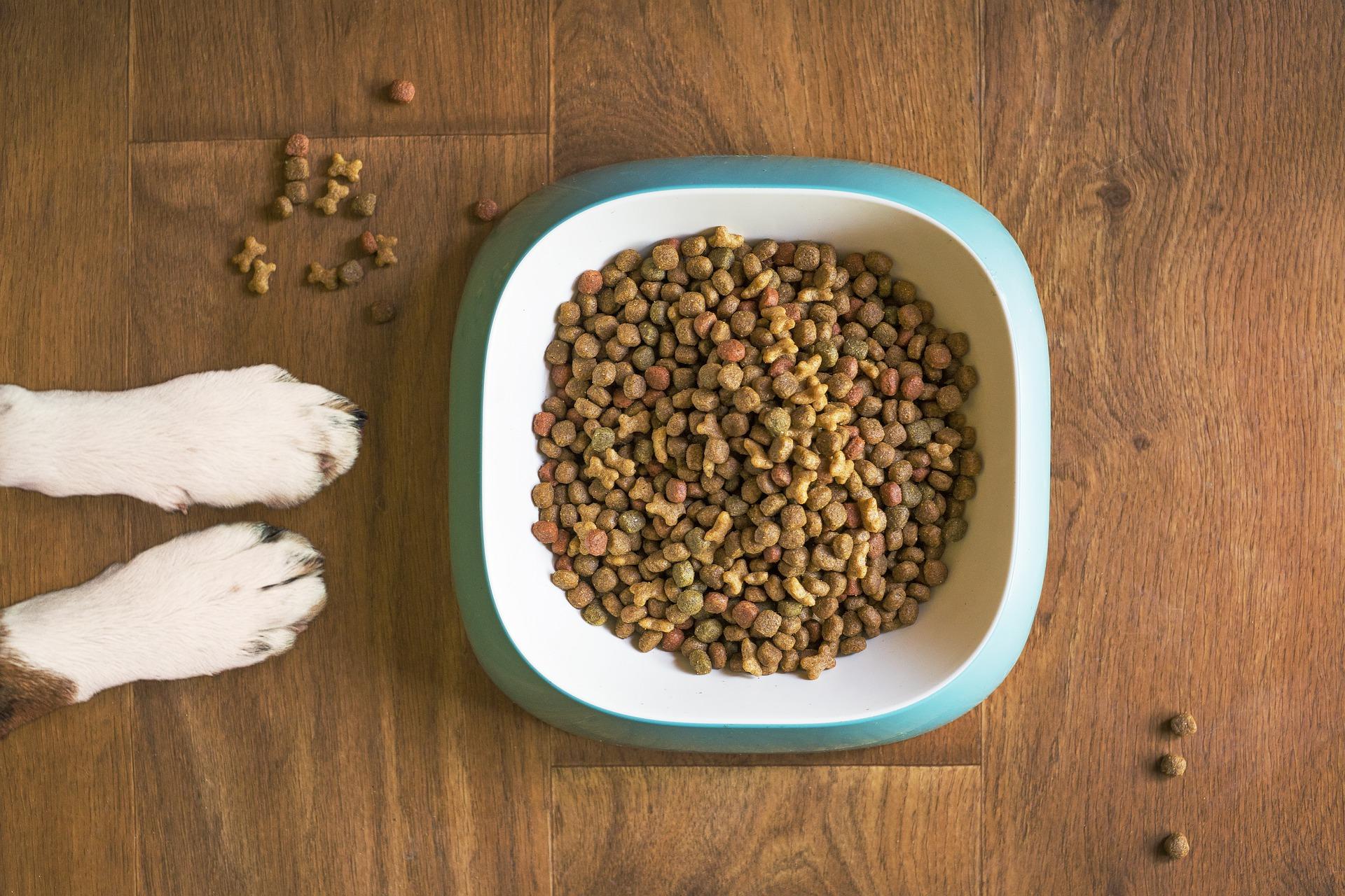 Wie viel Hundefutter sollte mein Hund bekommen?