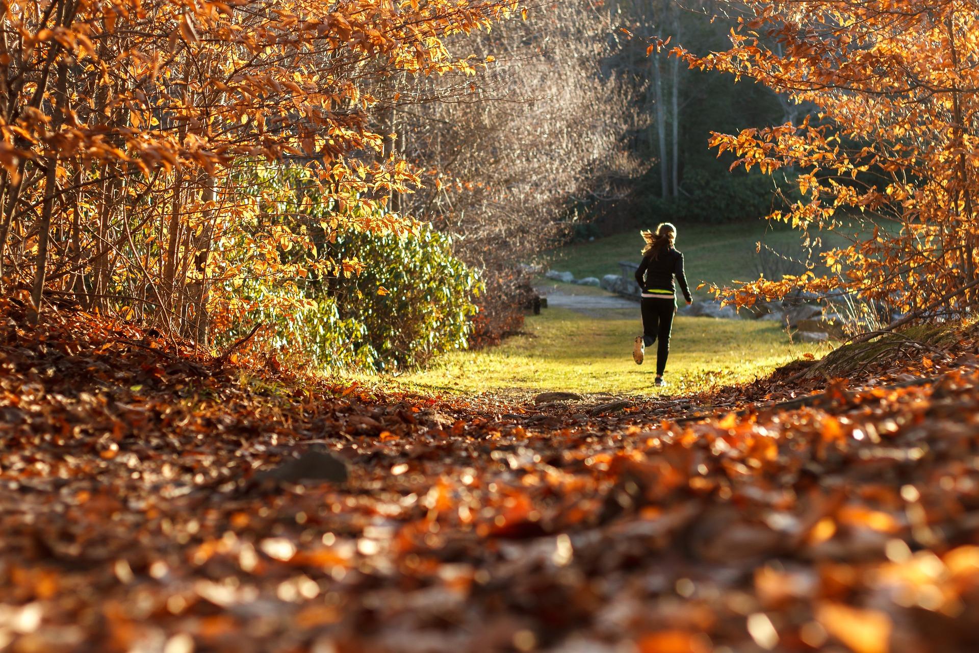 Joggen Hund Herbst