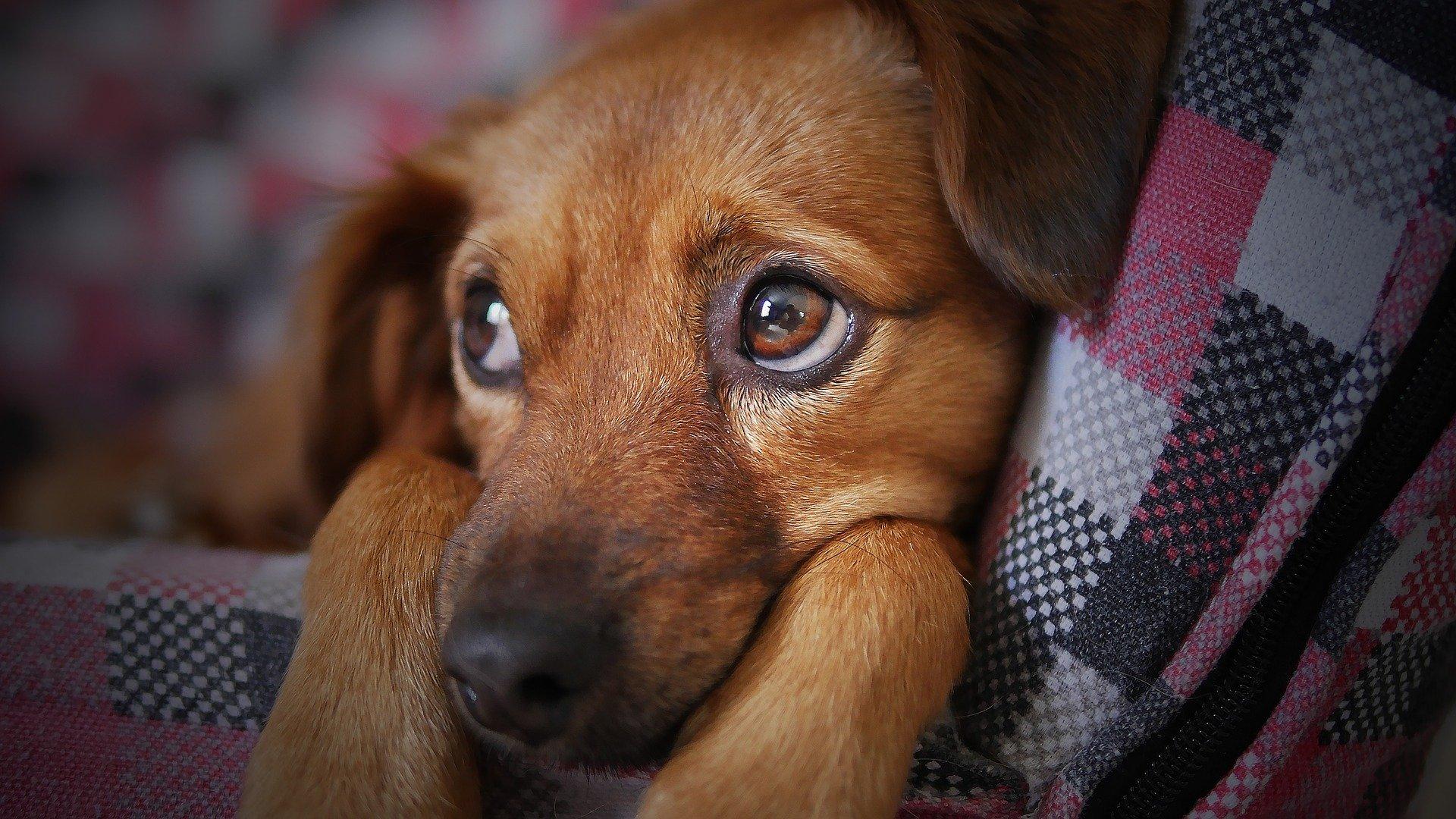Hund Gelenkschmerzen